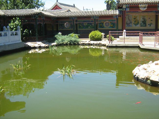 chinese-pond-after-01